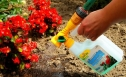 Watering-Can ? liquid fertilizer for roses, geranium and other bloomers
